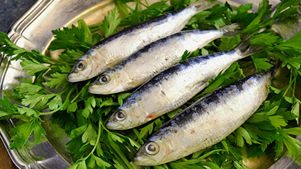 魚介類 原材料紹介 株式会社ケイエムテイ